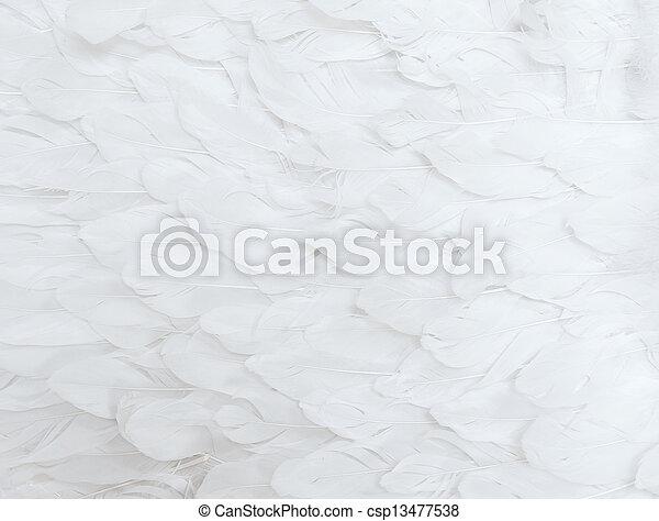 White Feathers - csp13477538