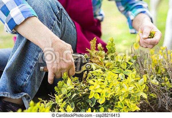 Woman pruning a bush - csp28216413