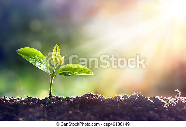 Young Plant Growing In Sunlight - csp46136149