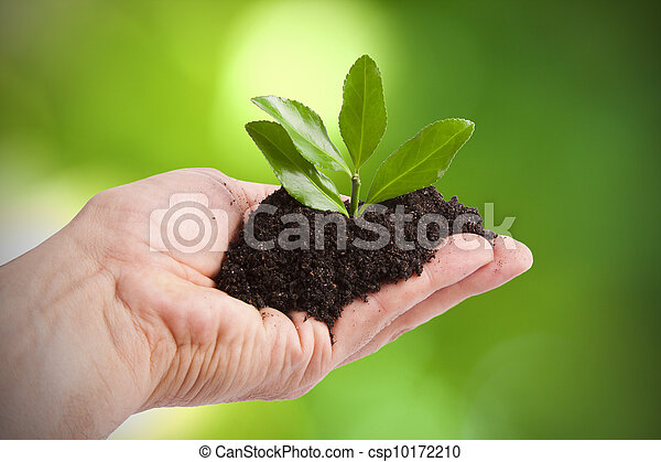 young tree to plant by man, Ecology and the Environment - csp10172210